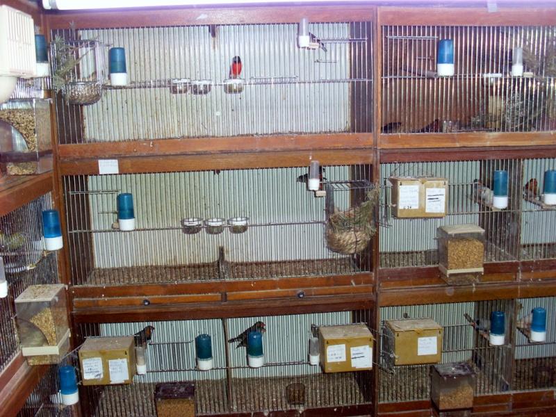 Présentation de ma pièce d'élevage Sl382813
