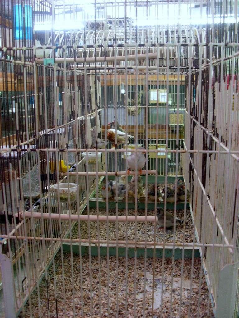 Présentation de ma pièce d'élevage Sl382819