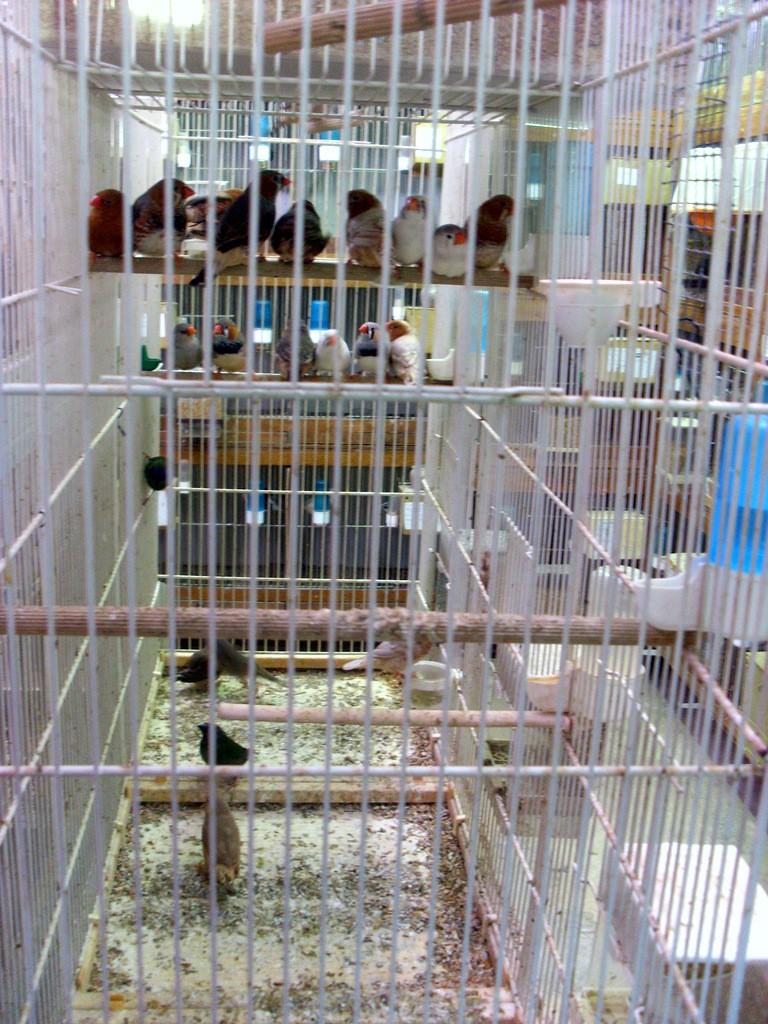 Présentation de ma pièce d'élevage Sl382820