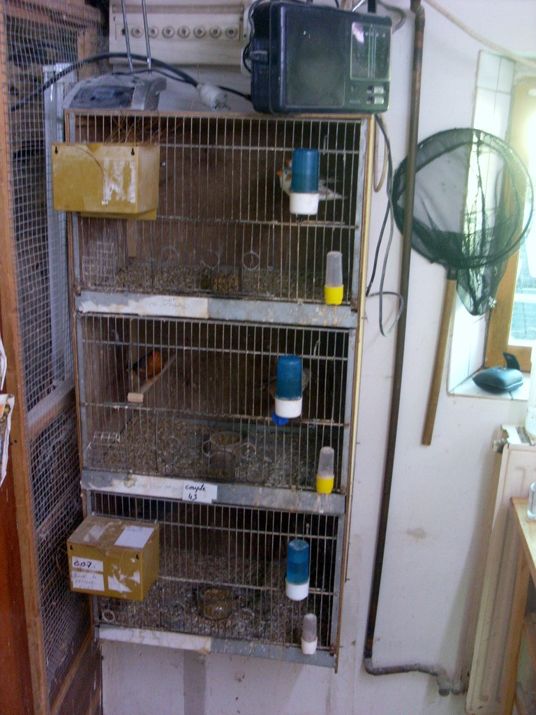 Présentation de ma pièce d'élevage Sl382821