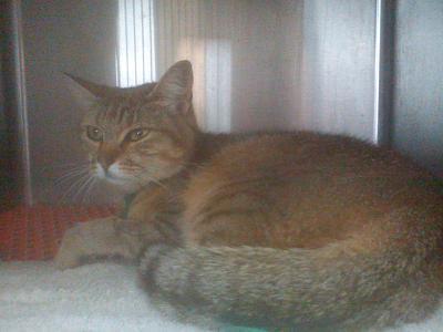 Urgent avant fourriere 5 juillet : 4 chats blessés chez vetos(94)/ Dsc00510