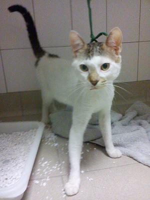 Urgent avant fourriere 5 juillet : 4 chats blessés chez vetos(94)/ Dsc00511