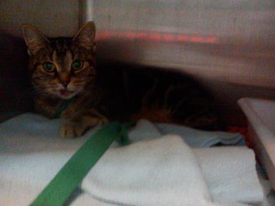 Urgent avant fourriere 5 juillet : 4 chats blessés chez vetos(94)/ Dsc00512