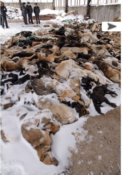 В Туле найдено около 150 трупов собак.. X_acf710