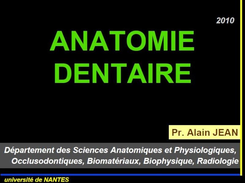 anatomie - ANATOMIE DENTAIRE Ana10