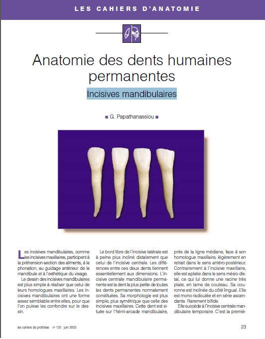 anatomie - Anatomie des dents humaines permanentes : Incisives mandibulaires Ic_man10
