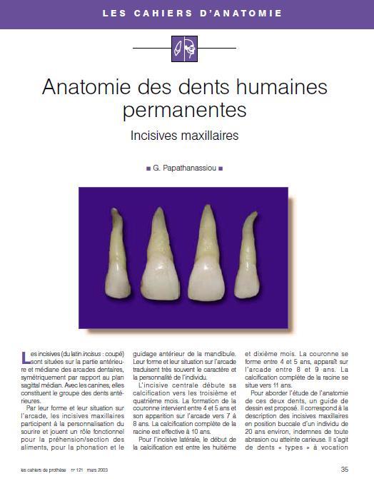 anatomie - Anatomie des dents humaines permanentes : incisives maxillaires Incisi10