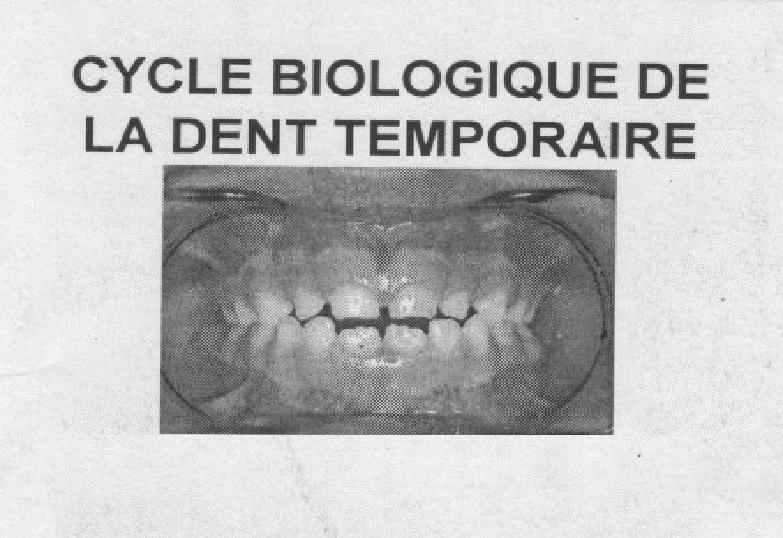 ��dent�� - Cycle biologique de la dent temporaire Sans_t17