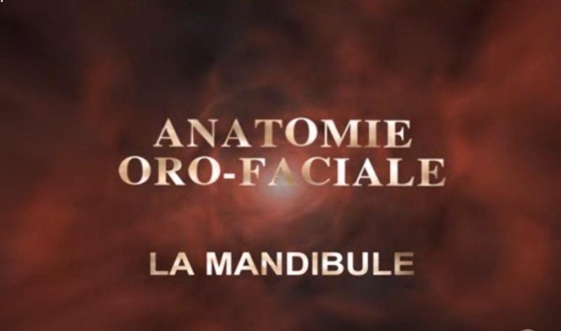 anatomie - Anatomie de la Mandibule [vidéo] Sans_t47