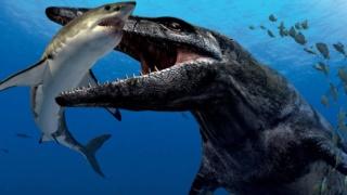 Oceanic Creatures Maxres11