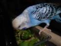 Petite perruche pas très intéressée ... Imgp2310
