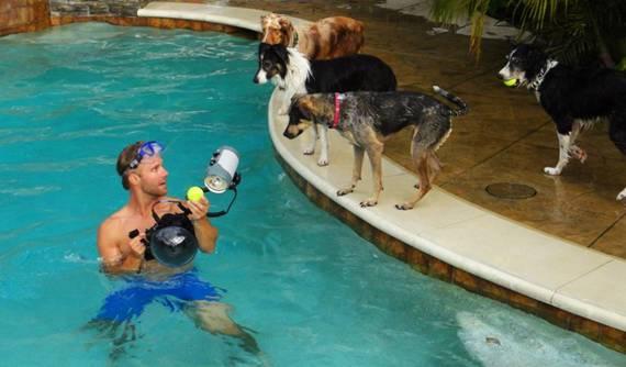 Nos chiens sont des sacrés plongeurs a voir ! Image010