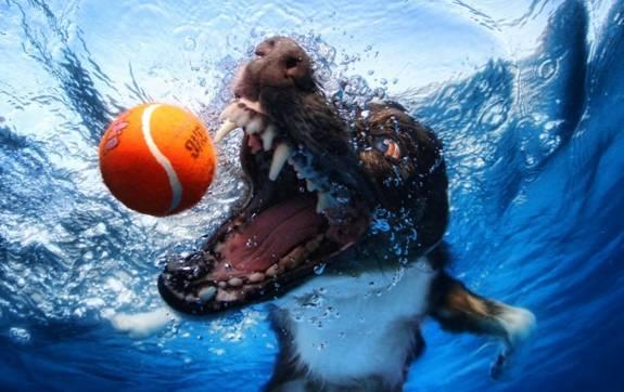 Nos chiens sont des sacrés plongeurs a voir ! Image013