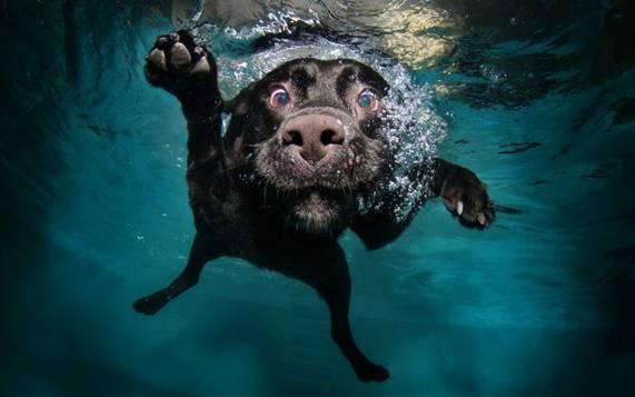 Nos chiens sont des sacrés plongeurs a voir ! Image014