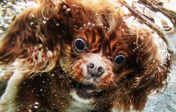 Nos chiens sont des sacrés plongeurs a voir ! Image015