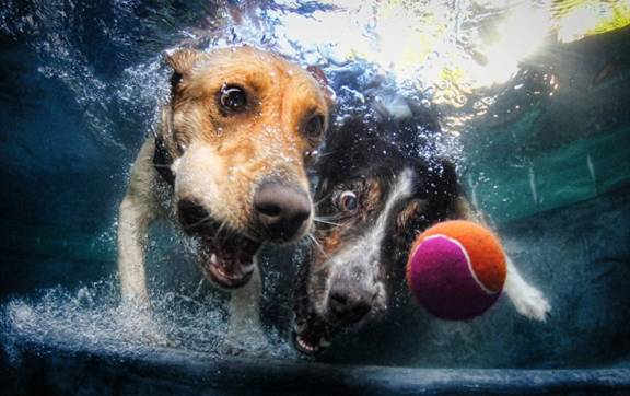 Nos chiens sont des sacrés plongeurs a voir ! Image016