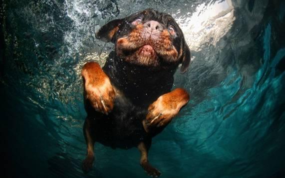 Nos chiens sont des sacrés plongeurs a voir ! Image017