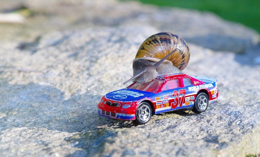 l escargot rigolo Scargo10