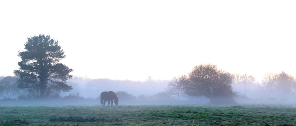 Cheval dans le brouillard Seul_d12