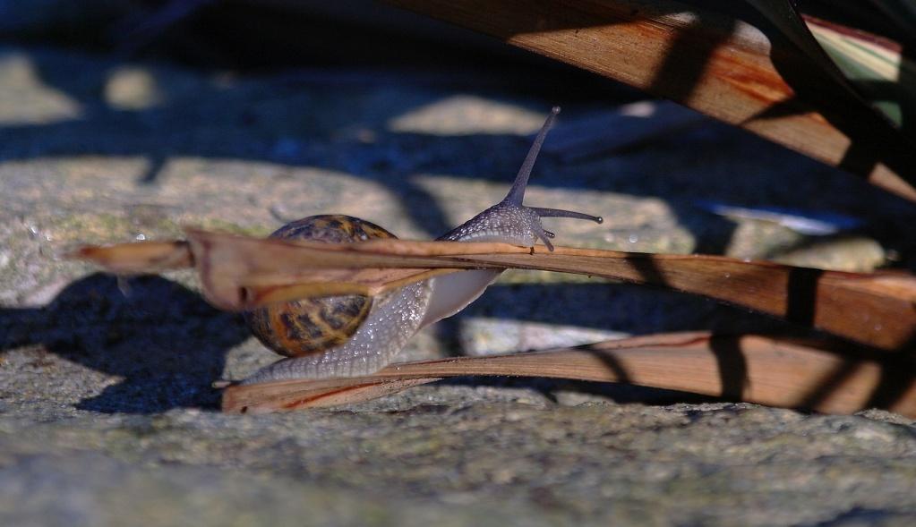 l escargot rigolo Skar_f10