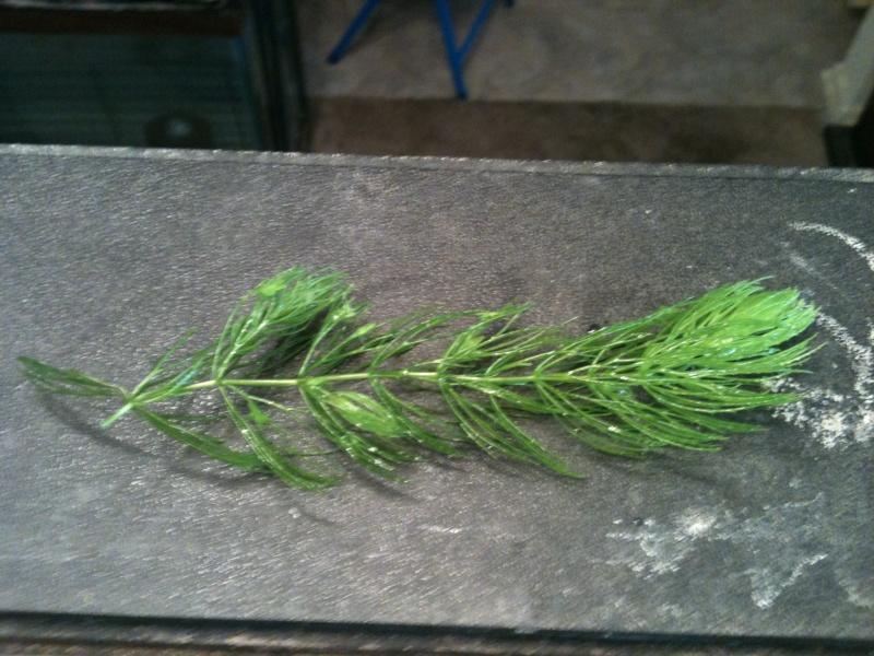 Plant ID Img_0310