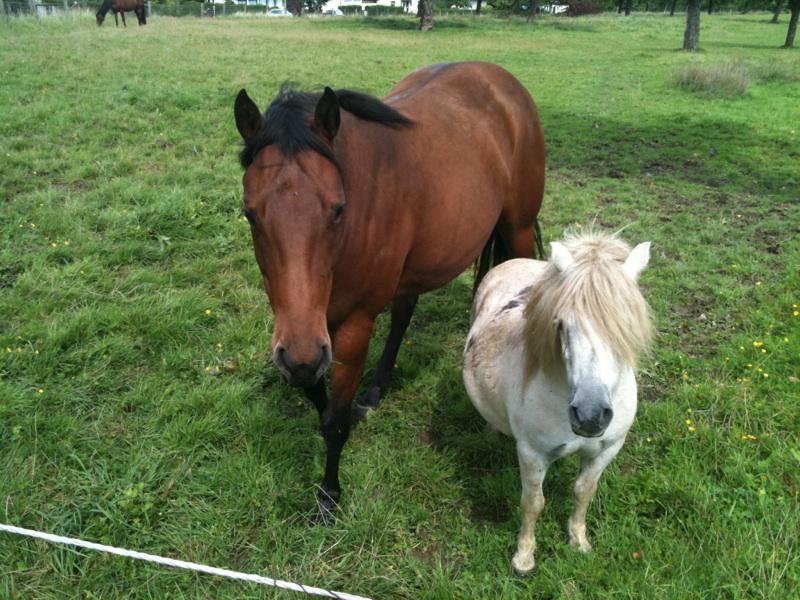 cohabitation chevaux-shetland : est-ce possible ? - Page 2 Img_3011