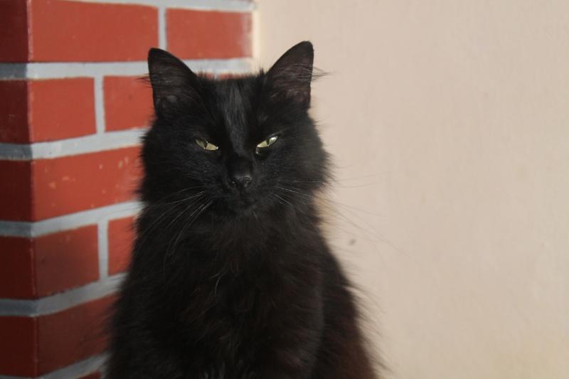 EPICE magnifique chatte noire angora née le 01/06/2009 adoptée - Page 6 Img_0510