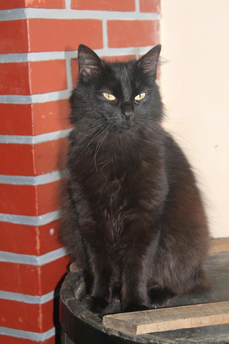 EPICE magnifique chatte noire angora née le 01/06/2009 adoptée - Page 6 Img_0511