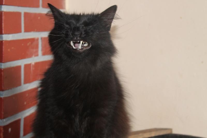 EPICE magnifique chatte noire angora née le 01/06/2009 adoptée - Page 6 Img_0512