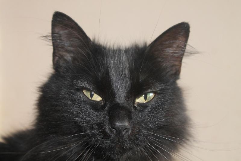 EPICE magnifique chatte noire angora née le 01/06/2009 adoptée - Page 6 Img_0514