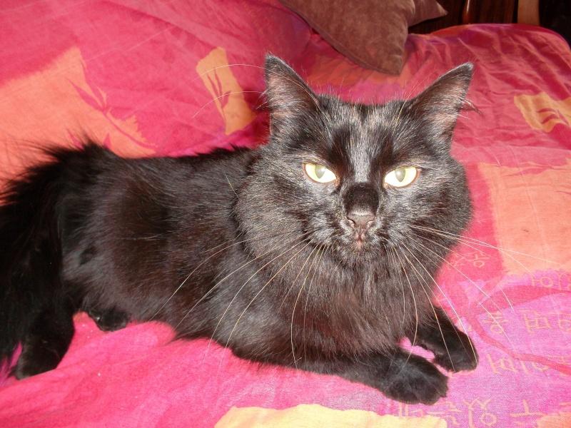 EPICE magnifique chatte noire angora née le 01/06/2009 adoptée - Page 7 Sam_0012