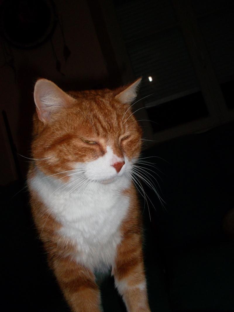 Caramel, mâle type européen blanc et roux né le 15/07/06 Sam_1416