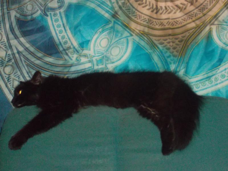 EPICE magnifique chatte noire angora née le 01/06/2009 adoptée - Page 6 Sam_1828