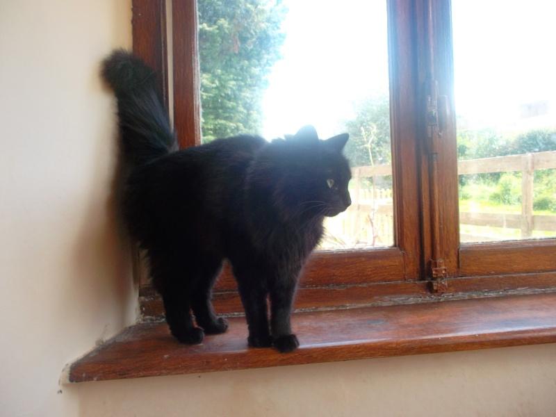 EPICE magnifique chatte noire angora née le 01/06/2009 adoptée - Page 6 Sam_1830