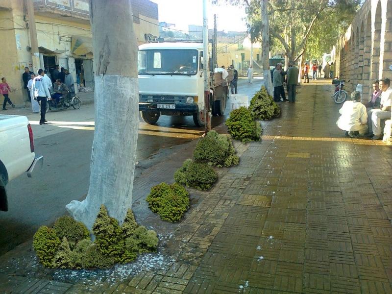 لن تتوقع ما سوف تشاهده ... صورة نادرة من مدينة مسعد 02210