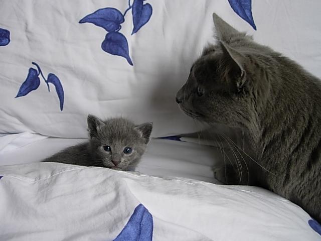 Fêanor's babies Sans__10