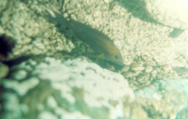 Les diapositives de Jean Pierre en plongée au Tanganyika. 000410
