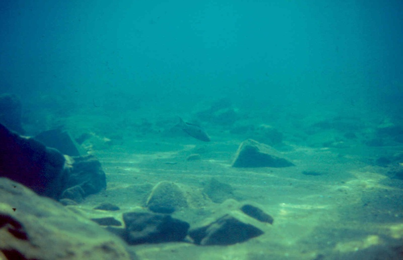Les diapositives de Jean Pierre en plongée au Tanganyika. 001010