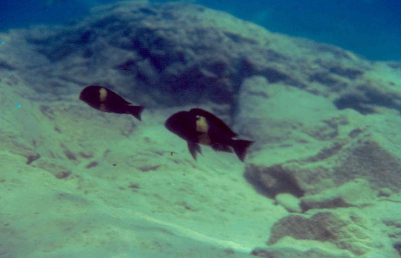 Les diapositives de Jean Pierre en plongée au Tanganyika. 002610