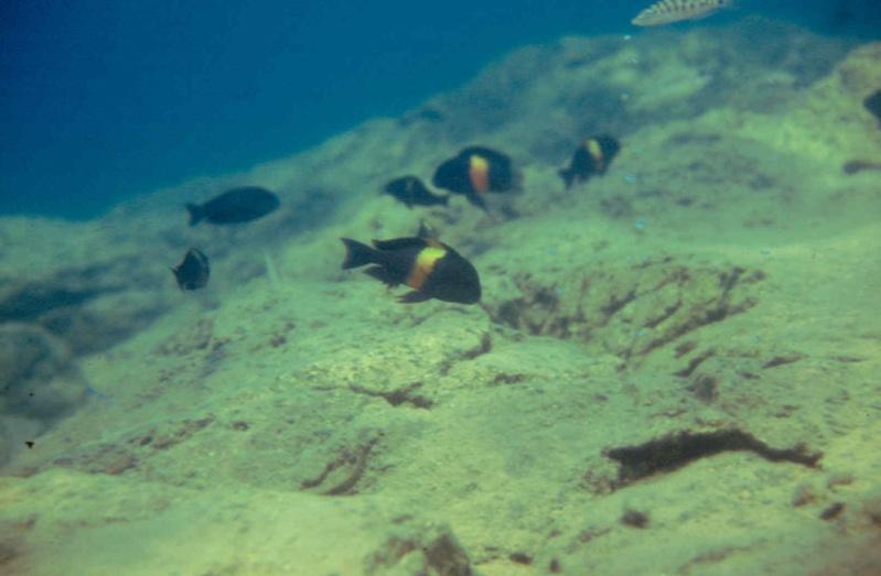 Les diapositives de Jean Pierre en plongée au Tanganyika. 002810
