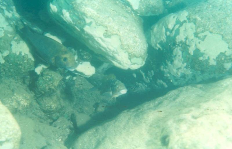 Les diapositives de Jean Pierre en plongée au Tanganyika. 005610