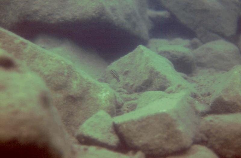 Les diapositives de Jean Pierre en plongée au Tanganyika. 006110