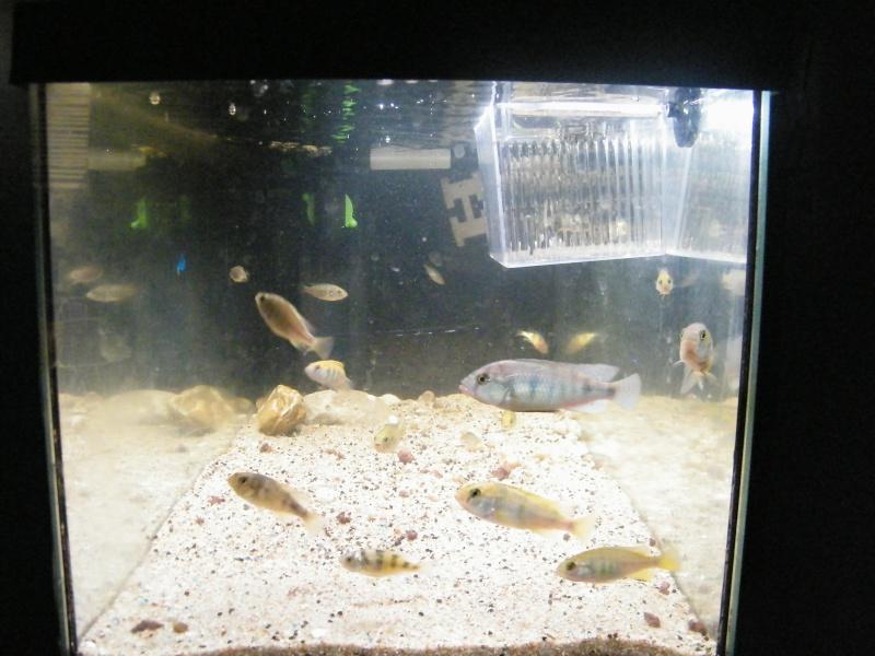 et de .... evolution d'un bac jusqu'a la fish room !! - Page 13 Decemb24
