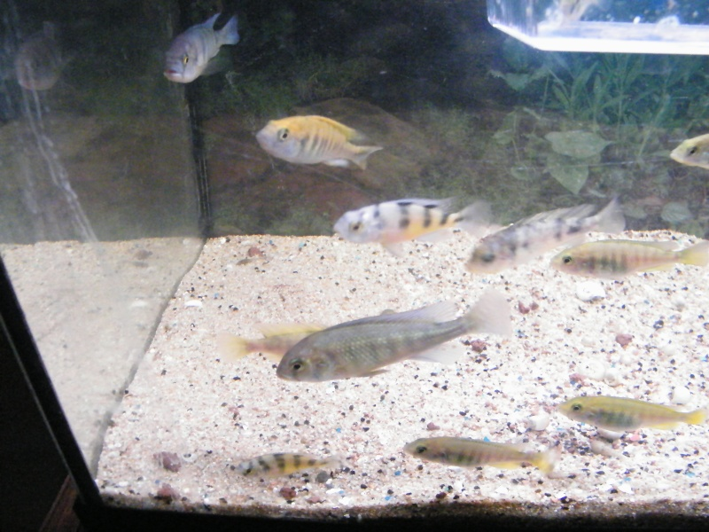 et de .... evolution d'un bac jusqu'a la fish room !! - Page 13 Decemb26