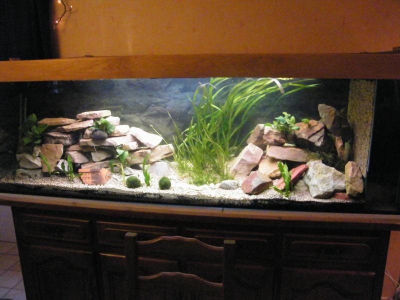 et de .... evolution d'un bac jusqu'a la fish room !! - Page 13 Decemb27