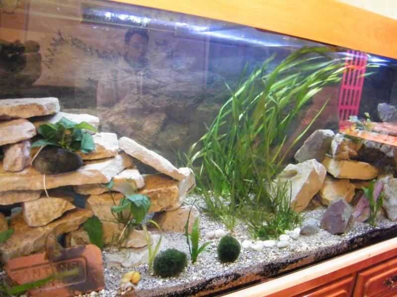 et de .... evolution d'un bac jusqu'a la fish room !! - Page 13 Decemb28
