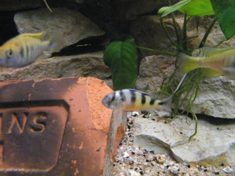 et de .... evolution d'un bac jusqu'a la fish room !! - Page 13 Decemb31