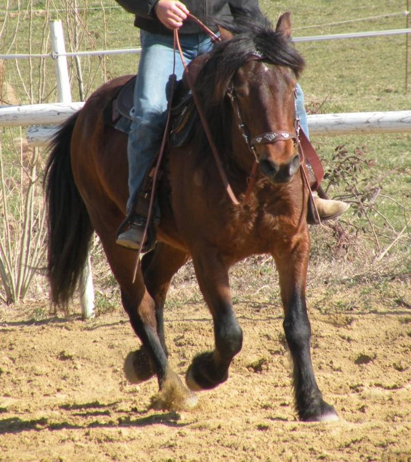 cheval du vercor  à vendre Lazlo_10