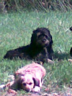 Mes 3 chiens  La_pai10