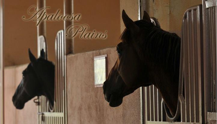 Apaloosa Plains Ap_ban11
